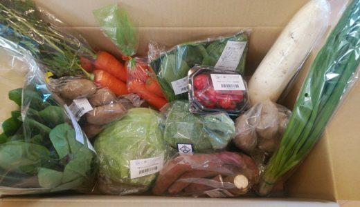 【体験談】食材宅配「ココノミ」初回の「野菜食べ比べ」を野菜嫌いの子供たちに頼んでみたよ
